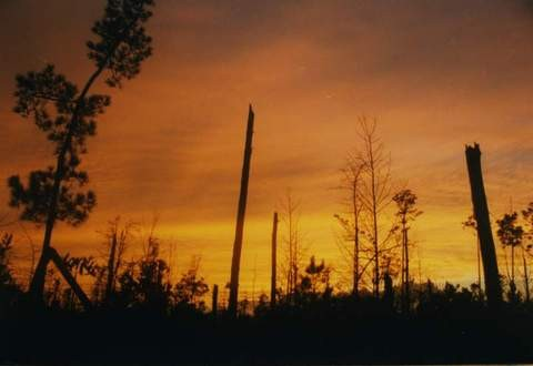 Francis-Marion-National-Forest-after-Hurricane-Hugo-by-hdport.jpg