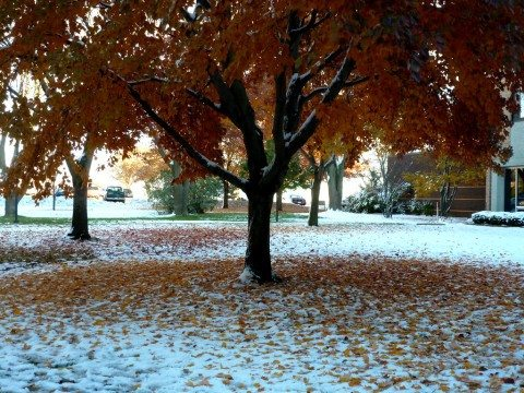 early-snow-fall-leaves