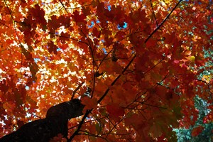 fall-destinations-photo-by-coconino-national-forest.jpg