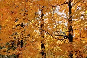 10 Incredible Places To See Fall Foliage + U.S. States With The Best Colors