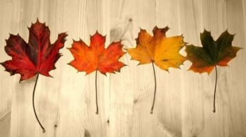 How To Preserve Your Collection Of Fall Leaves – 4 Different Techniques
