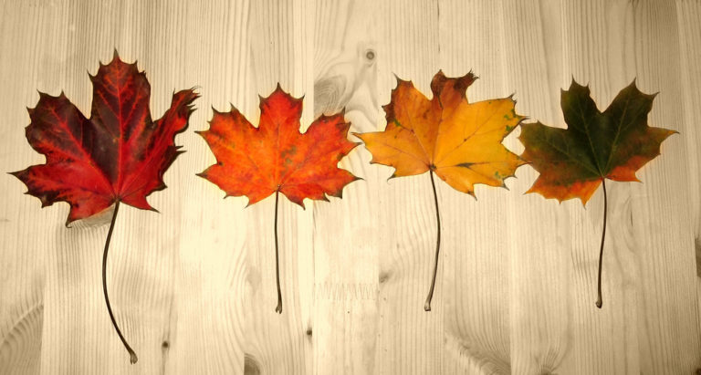 How To Preserve Your Collection Of Fall Leaves Fun Times