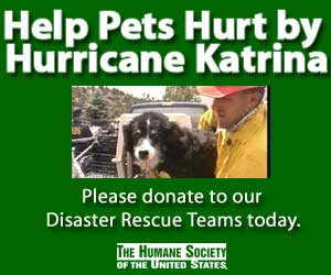 The Humane Society of the United States - consider a donation to HSUS to help the animals displaced by Hurricane Katrina.