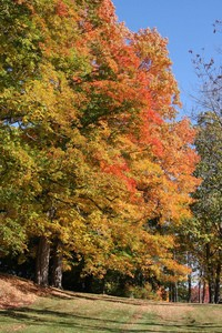 indian-summer-trees-by-ReneS.jpg