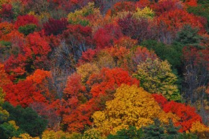 Early Arrival Of New England Fall Colors: A Sign Of Climate Change?
