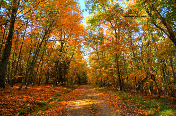 Tracking Autumn Leaves The Best Fall Foliage Map For Each Colorful