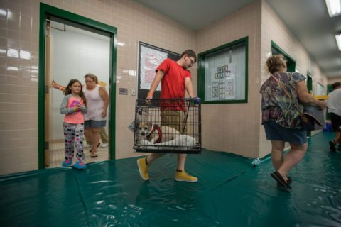 find a pet friendly hurricane shelter
