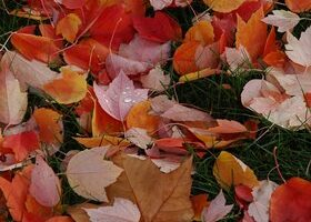 How The Weather Affects Fall Foliage Colors