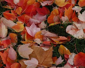 red-orange-colorful-fall-leaves-by-wonderlane.jpg