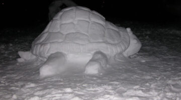 snow-turtle-sculpture