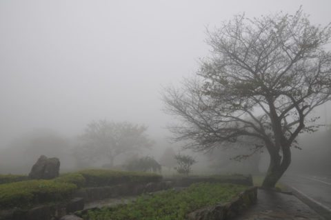 Here's some great information about how fog is formed