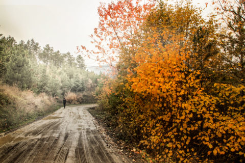 Why do seasons change? Find out here!