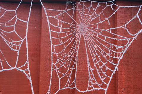 hoar-frost-on-spider-webs-by-Andrew-Michaels.jpg