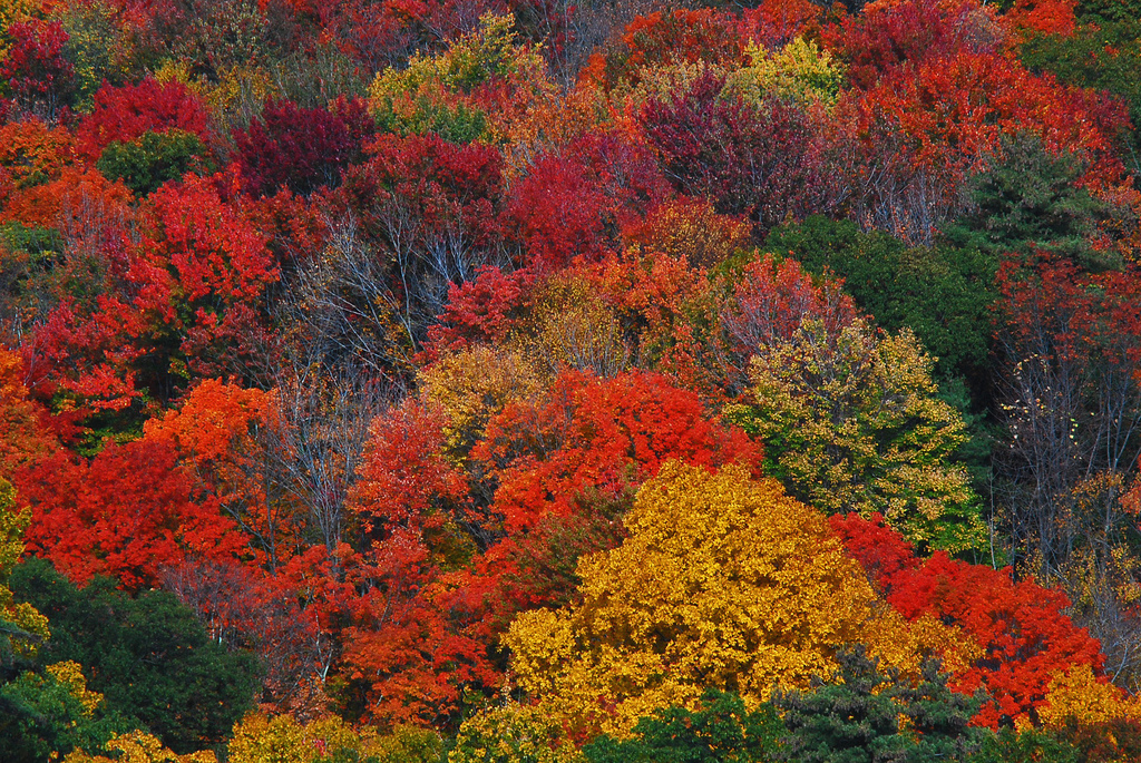 When new england fall colors arrive in high style a little early is