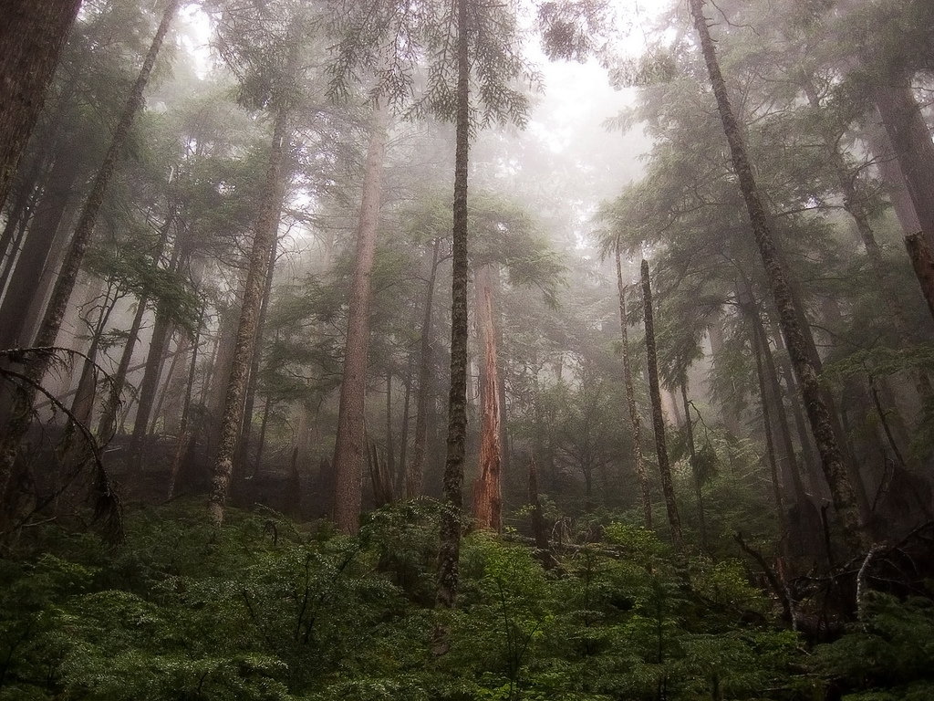 How You Can Help Save The Rainforest And Slow Global Warming   The ...