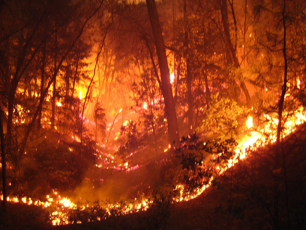 how can we prevent forest fires Incredible technology: how to fight wildfires to prevent unburned fuels from catching fire that fire is part of the landscape, what can we do to.